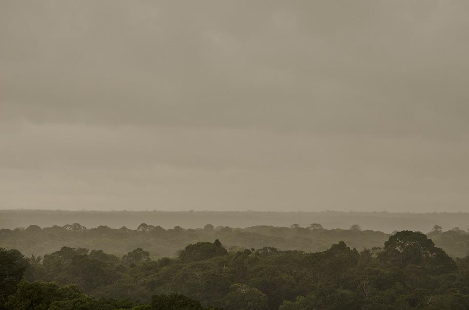 Amazon, Forest, Flora, Brazil, Trees, Cloudy, Nature