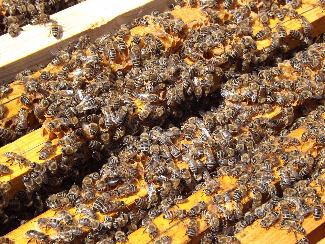 этнические пчеловод улей пчелы картинки как самостоятельно