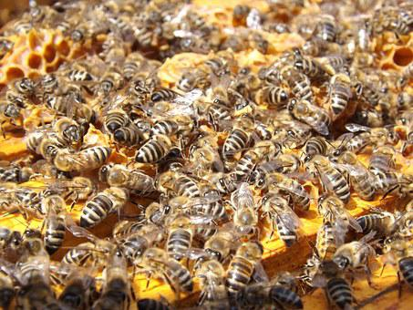 Bees, Beehive, Beekeeping, Honey, Busy