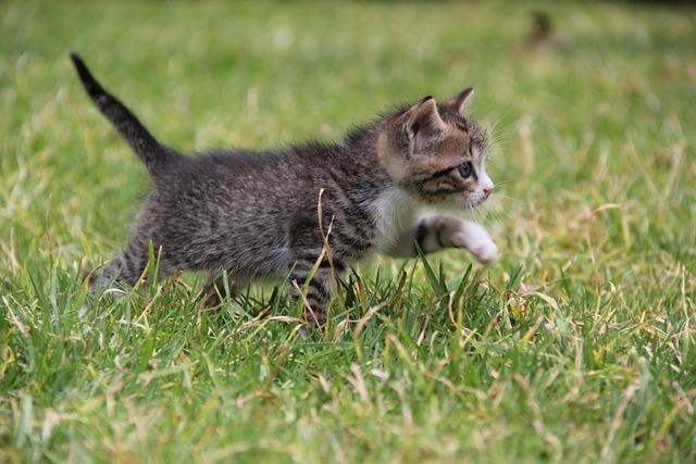 free photo kitten cat feline pet animal free image