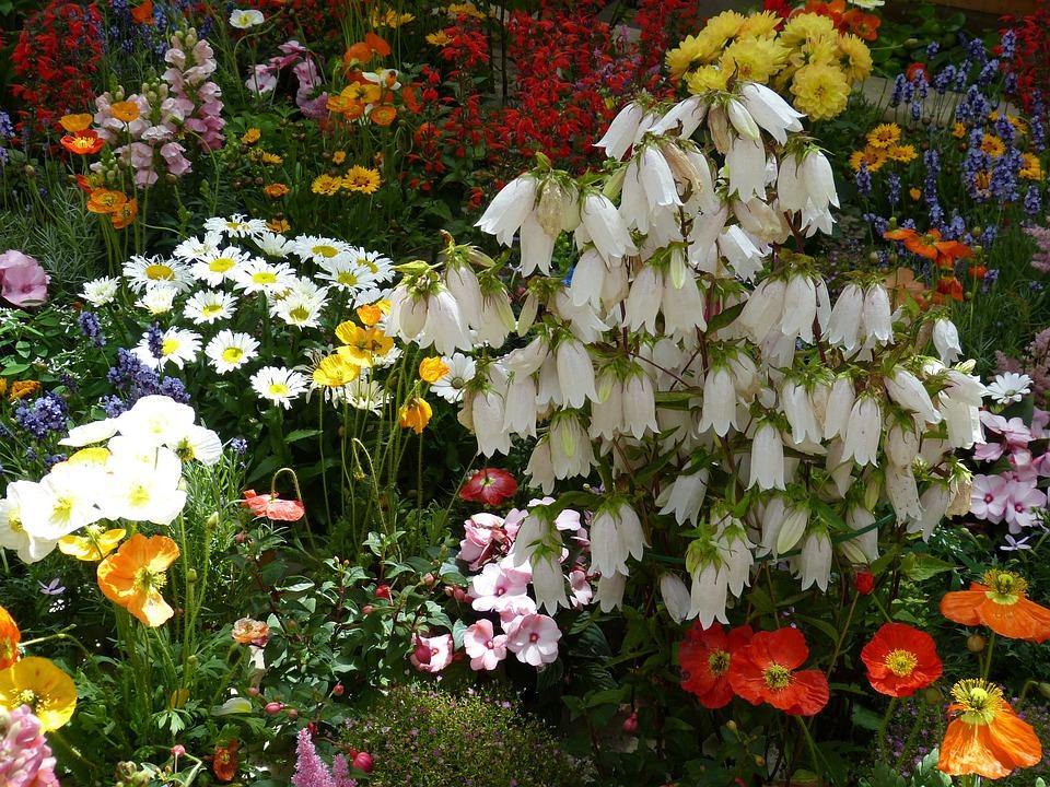 Фото летние цветы в природе 51