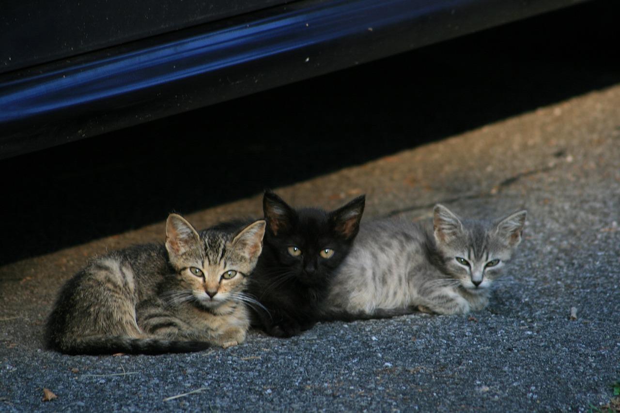 Kittens Cats Stray - Free photo on Pixabay