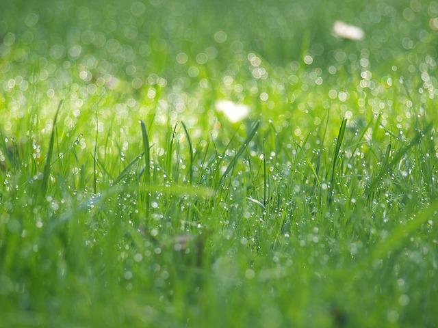 hd grass wallpaper