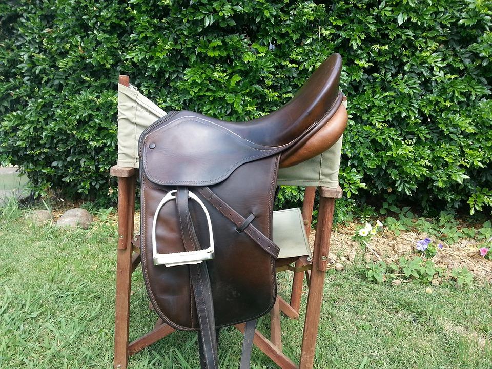 Horse, Saddle, Riding, Equine, Equestrian