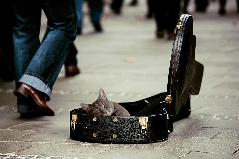 Китти, Животное, Домашние Животные, Кошка