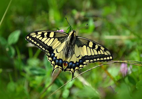 10,000 Butterfly Pictures & Images [HD] - Pixabay - Pixabay