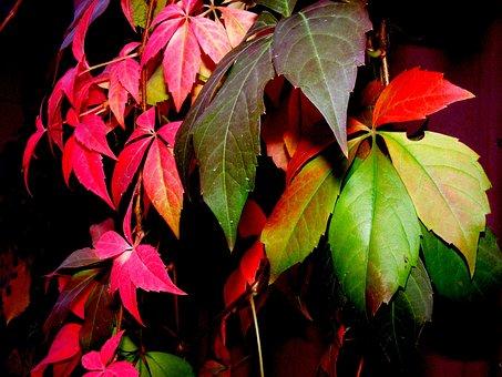 Yaprak Boyama Resimler ücretsiz Resimleri Indir Pixabay