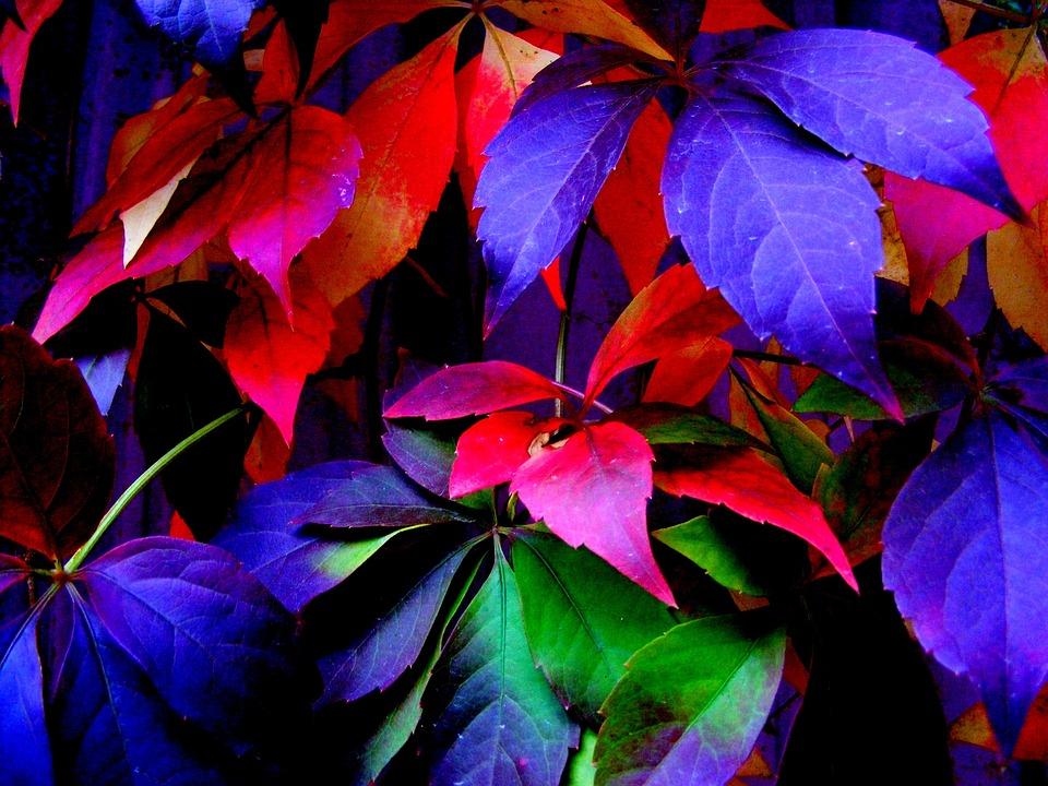 Yaprak Sonbahar Boyama Pixabayde ücretsiz Fotoğraf