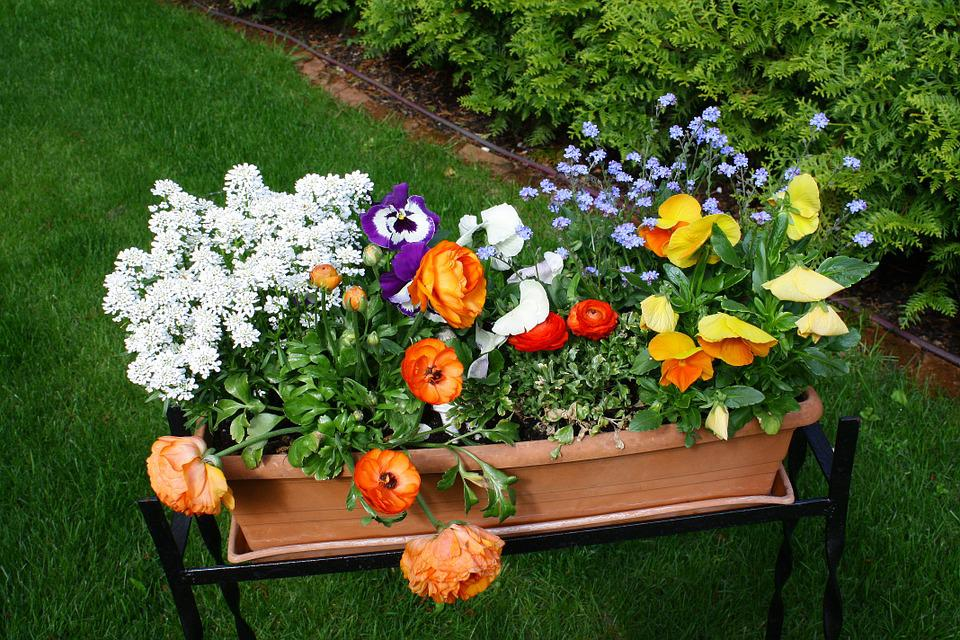 Fiori giardino colorato · foto gratis su pixabay