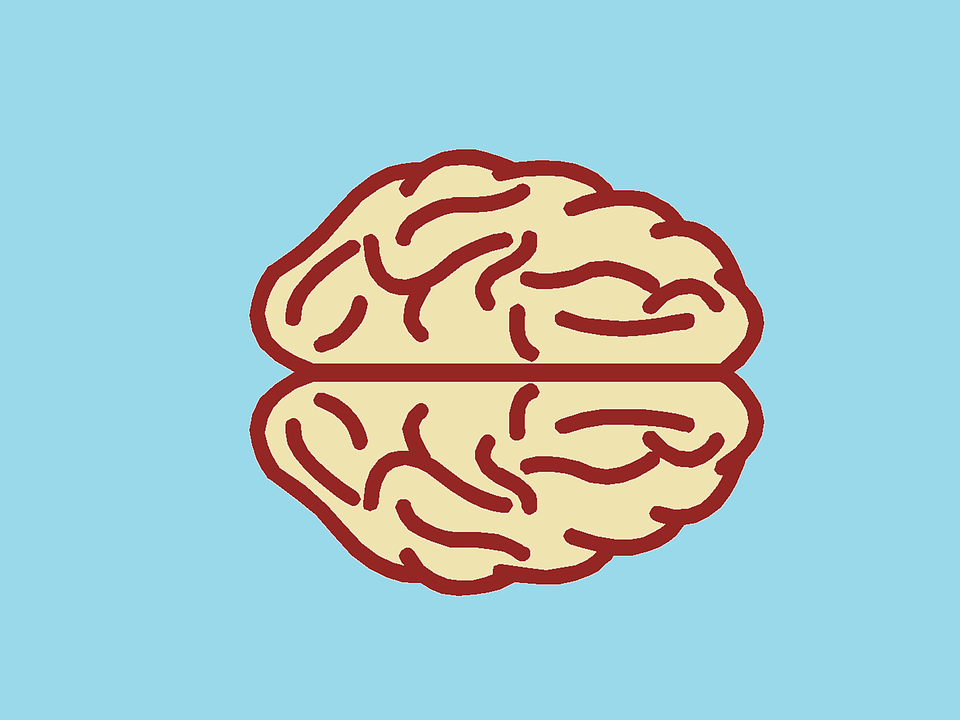 Cerebro Órgano Anatomía · Imagen gratis en Pixabay
