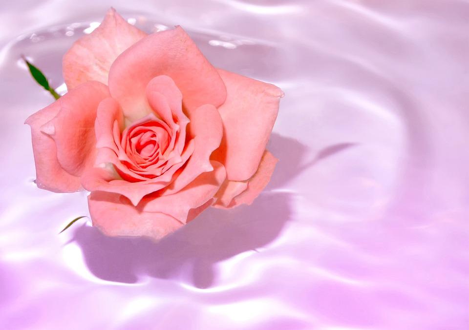 kostenloses foto rosa blume wasser ehegatten kostenloses bild auf pixabay 496198. Black Bedroom Furniture Sets. Home Design Ideas