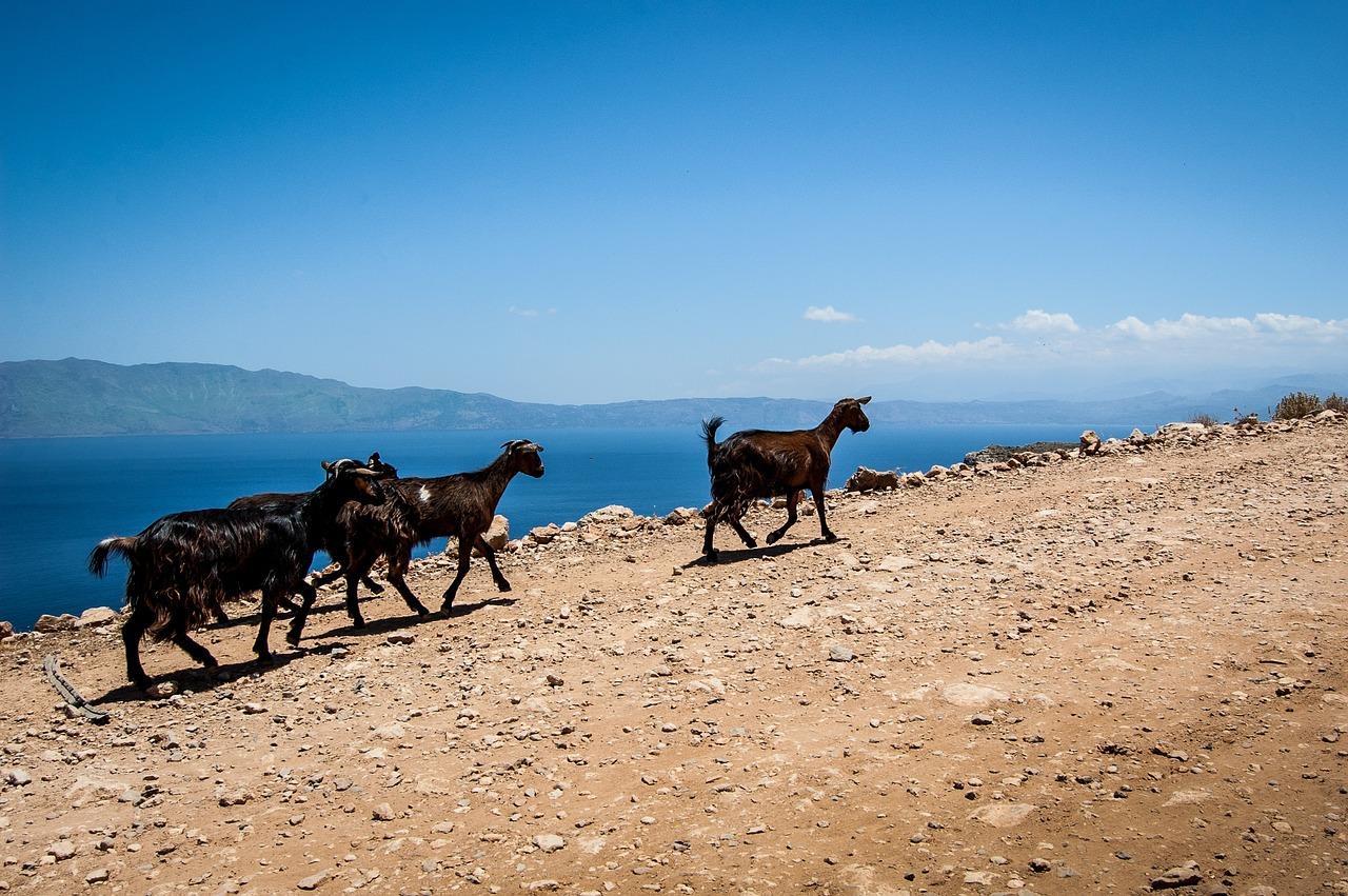 постеснялась картинки греция козы несмотря
