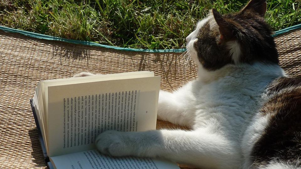 Reading, Book, Cat, Literature