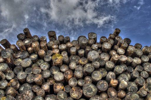 Troncos De Árboles Madera Woodpile Foresta