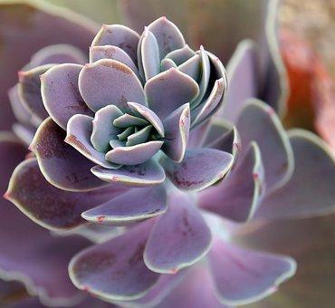 2,000+ Succulent Pictures & Images [HD] - Pixabay - Pixabay