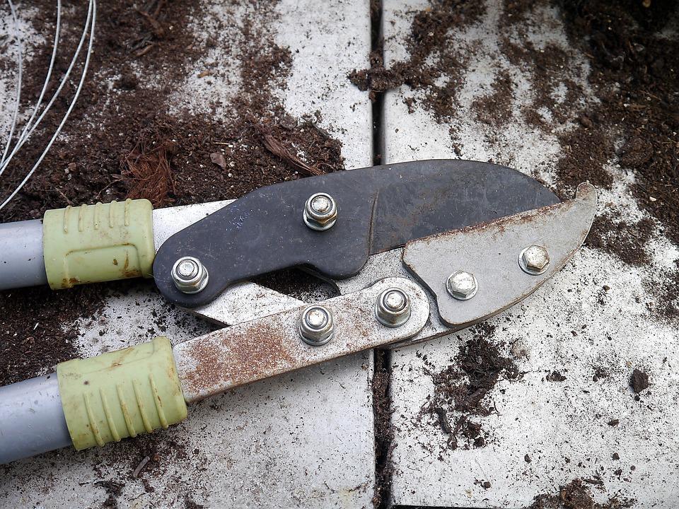 Free photo secateurs tool gardening cutting free for Gardening tools secateurs