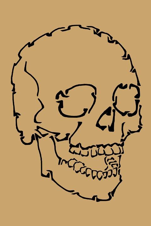 Schädel Anatomie Menschliche · Kostenloses Bild auf Pixabay