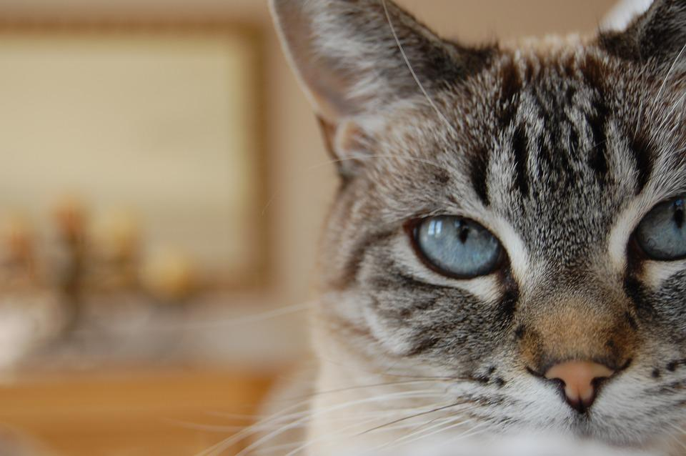 cat trill sound