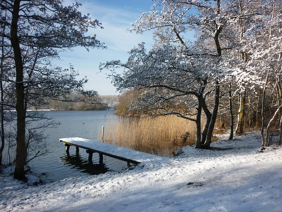 Photo gratuite paysage d 39 hiver neige roseau image - Photos de neige gratuites ...