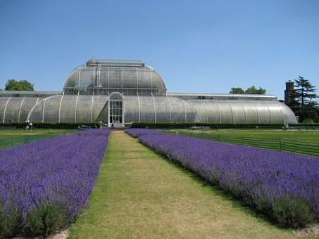 Kew Gardens, Lavender, London, England
