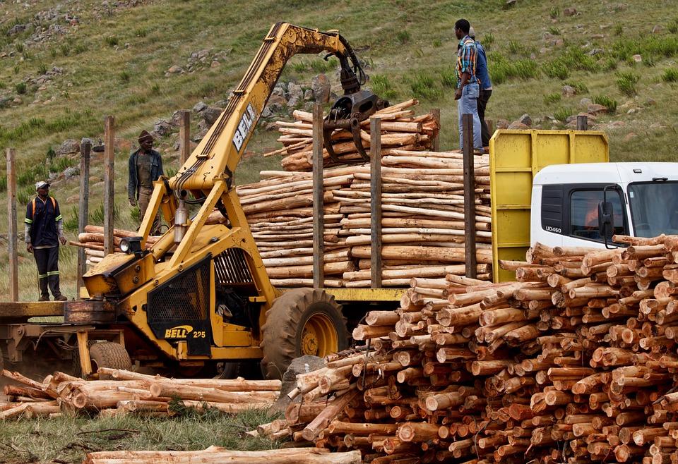 Free Photo Job Work Logging Timber Wood Free Image