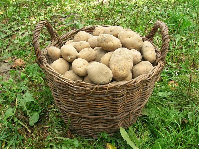 photo gratuite pommes de terre panier r colte image gratuite sur pixabay 501132. Black Bedroom Furniture Sets. Home Design Ideas