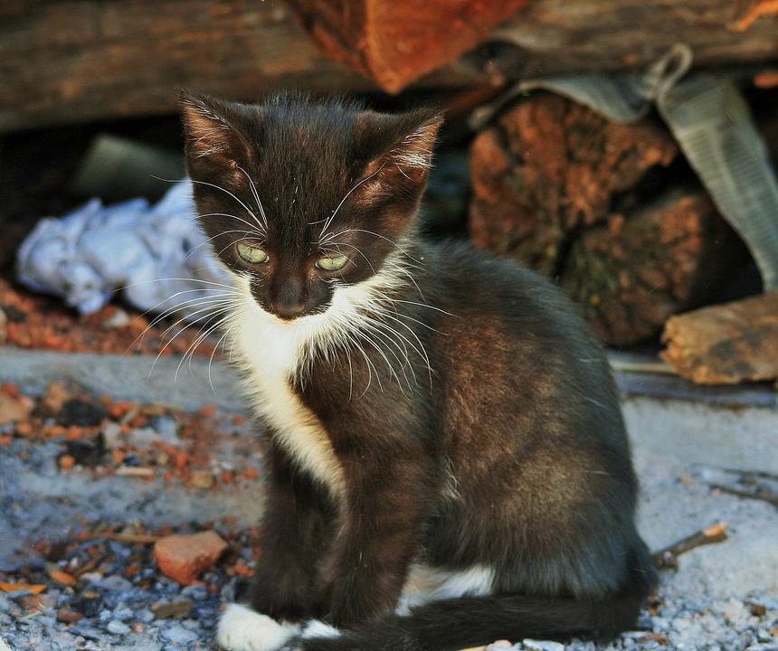 malé černé kočička obrázky