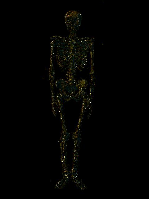 skelett medizinische knochen  u00b7 kostenloses bild auf pixabay