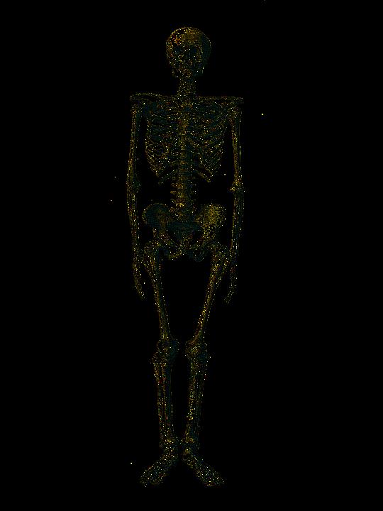 Skeleton Medical Bone Free Image On Pixabay