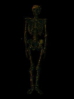 Anatomische Bilder · Pixabay · Kostenlose Bilder herunterladen