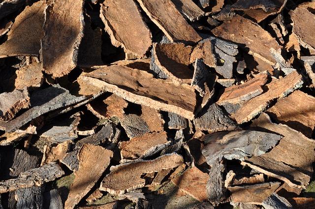 Free photo: Cork Oak, Cork, Tree Bark - Free Image on Pixabay - 505263