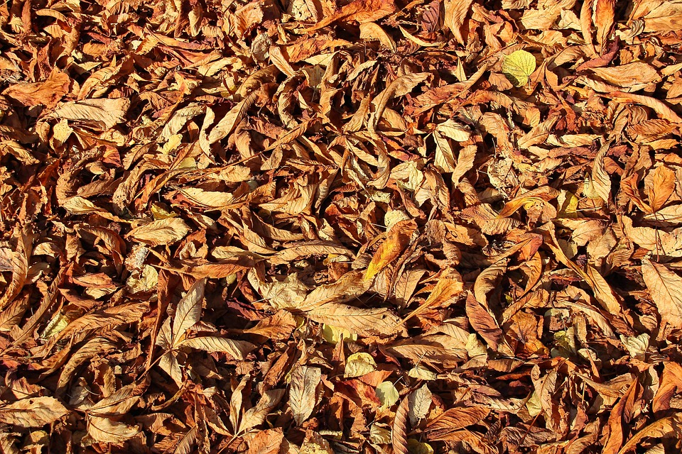 free photo: leaves, autumn, forest floor, color - free image on