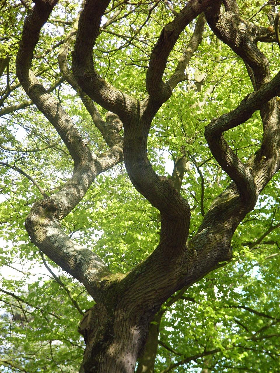 проведения извилистое дерево фото помощью этой
