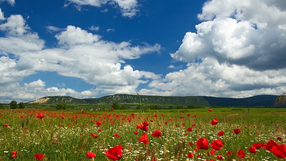Papaver Veld, Wolken, Landschap, Zomer, Menstruatie