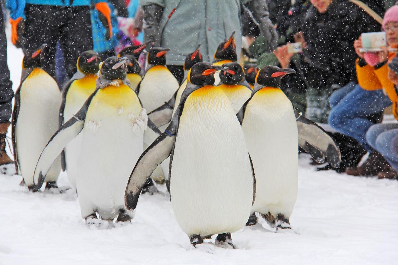 Фото пингвины зимой
