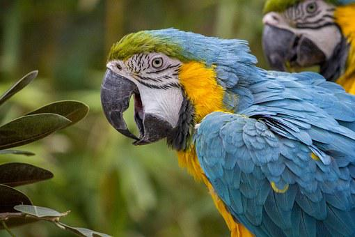 Macaw Parrot Tropical Bird Color Blue Wild