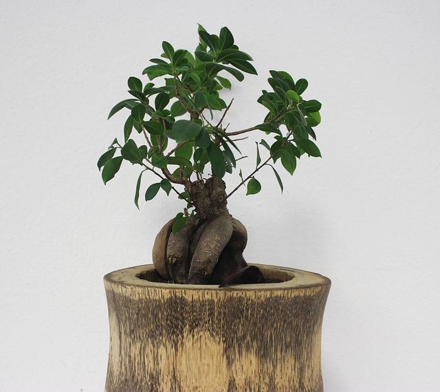 Photo gratuite bonsa arbre bureau vert image for Bureau images gratuites