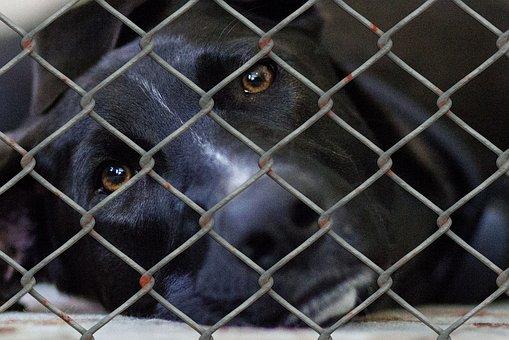 Hund, Tierheim, Tierhaltung, Tierwelt