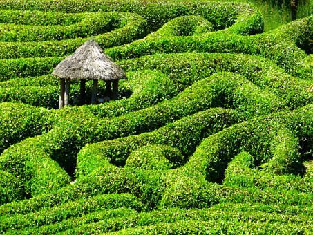 Maze, Labyrinth, Glendurgan, Garden