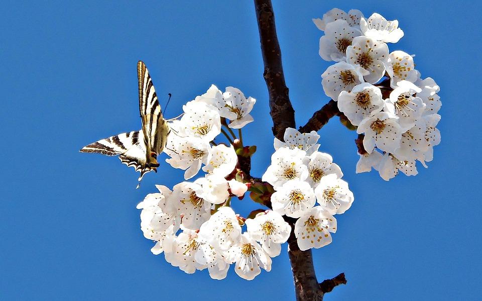 foto gratis borboleta flores campo natureza imagem