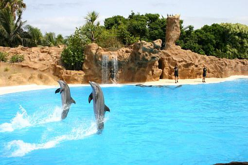 Dolphins, Demonstration, Animal Show