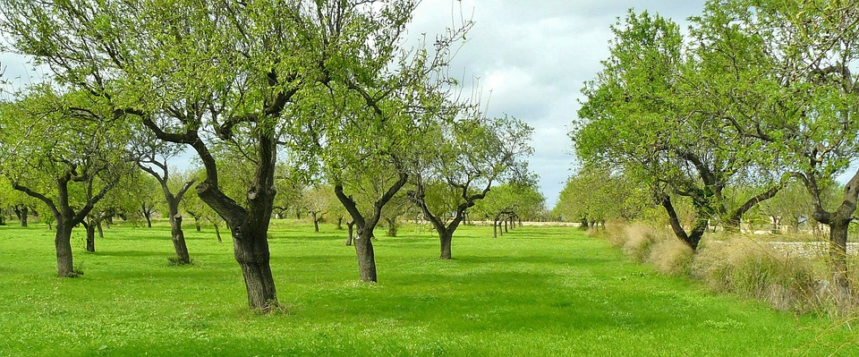 Three Tree Diseases Any Gardener Should Look Out For - Glenns Garden ...