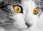 kot, dom, zwierzęcy