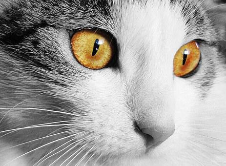 Cat, Home, Animal, Cat'S Eyes, Eyes, Pet