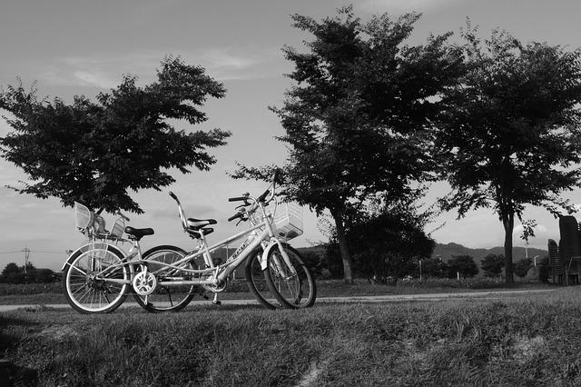 Photo Gratuite: Vélo, Pine, Paysage, Noir Et Blanc