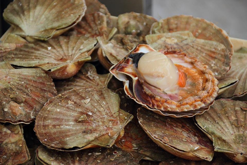 滨海边疆区的扇贝和贻贝产量增加