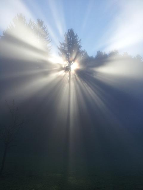 free photo  fog  tree  mood  sun  beyond  god - free image on pixabay