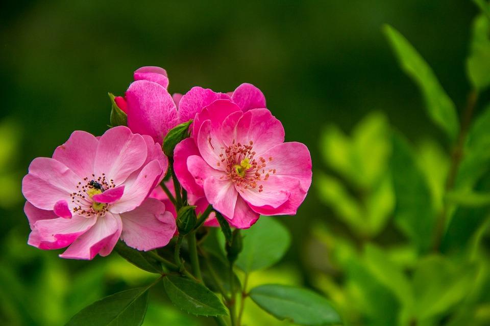 wild, flowers  free images on pixabay, Beautiful flower