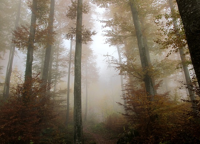 Free photo: Forest, Autumn, Leaves, Trees, Mood - Free ...
