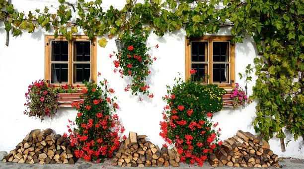 Ivy, Home Front, Flowers, Window